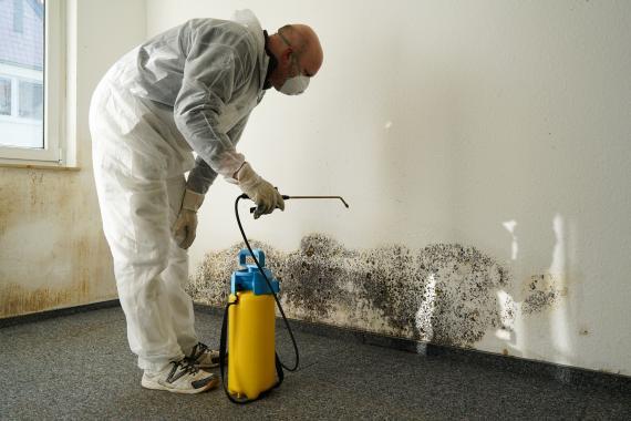 Extermination des insectes nuisibles: une affaire de professionnels