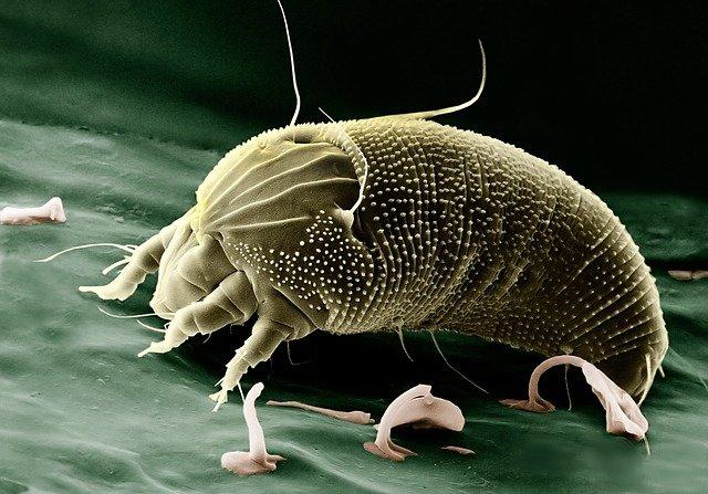 Comment lutter contre la prolifération des acariens?